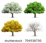 four seasons tree isolated 3d... | Shutterstock . vector #704538730
