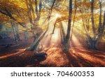 Amazing Autumn Forest In Fog...