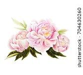 pink peony. watercolor... | Shutterstock . vector #704630260