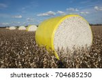 cotton bales in the field | Shutterstock . vector #704685250