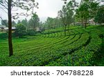 tea garden at the peak  bogor ... | Shutterstock . vector #704788228