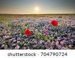 spring flowers  in meadow....   Shutterstock . vector #704790724