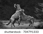 Horse Play - Fine Art prints