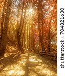 autumn colored bright leaves on ... | Shutterstock . vector #704821630