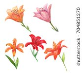 set of watercolor lily. | Shutterstock . vector #704851270