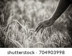 close up on the hand of a... | Shutterstock . vector #704903998