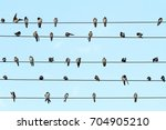 musical notes performed by... | Shutterstock . vector #704905210