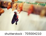 life cycle of a butterfly....