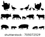 collection of silhouettes of... | Shutterstock .eps vector #705072529