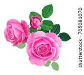 pink rose. isolated bouquet... | Shutterstock .eps vector #705081070