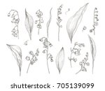 gorgeous drawing of lily of the ...   Shutterstock .eps vector #705139099