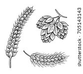 Barley And Wheat  Malt And Hop...