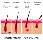 hair growth cycle | Shutterstock .eps vector #705147898