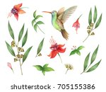 watercolor hand painted set... | Shutterstock . vector #705155386