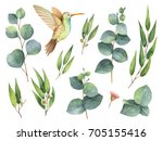 watercolor hand painted set... | Shutterstock . vector #705155416