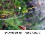 Dew Covered Spiderweb Suspende...