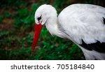 young stork. | Shutterstock . vector #705184840