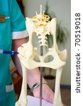 Small photo of Hip dysplasia model of the dog showing by doctor