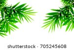 green bamboo leaves isolated on ... | Shutterstock . vector #705245608