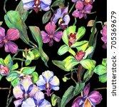 wildflower orchid flower... | Shutterstock . vector #705369679
