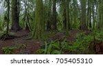 image of ancient rainforest ... | Shutterstock . vector #705405310
