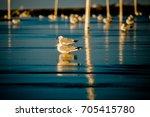 seagulls on the beach   Shutterstock . vector #705415780