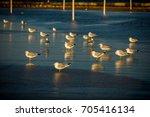 seagulls on the beach   Shutterstock . vector #705416134