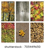collage of autumn backgrounds... | Shutterstock . vector #705449650