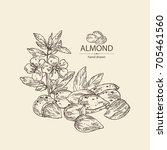 background with almond  almond... | Shutterstock .eps vector #705461560