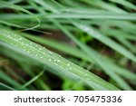 raindrops on green leaf | Shutterstock . vector #705475336