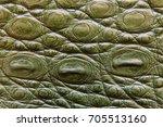 freshwater crocodile belly skin ... | Shutterstock . vector #705513160