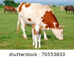 White And Brown Cow And Calf