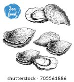 hand drawn sketch oyster... | Shutterstock .eps vector #705561886