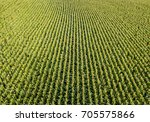 aerial view of corn field | Shutterstock . vector #705575866