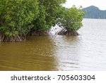 Mangrove Forest Help Protect...