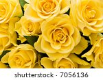 bouquet of yellow roses for background - stock photo