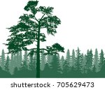 illustration with pine forest... | Shutterstock .eps vector #705629473
