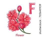 vector alphabet letter f. flower | Shutterstock .eps vector #705649939