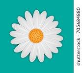 White Daisy Chamomile Flower