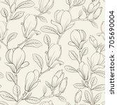 magnolia blooming flower.... | Shutterstock .eps vector #705690004