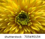 yellow flower   nice lighting... | Shutterstock . vector #705690154