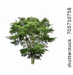 isolated tree on white... | Shutterstock . vector #705710758