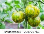 Striped Tomatoes Green Zebra...
