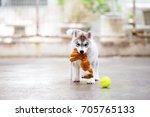 Siberian Husky Puppy Hold Doll...