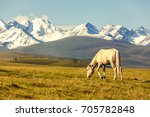 the white horse under snow... | Shutterstock . vector #705782848