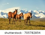 horses under snow mountains | Shutterstock . vector #705782854