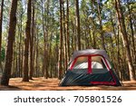 Camping Tent In Pine Forrest