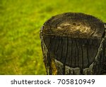 old dry stump with crack... | Shutterstock . vector #705810949