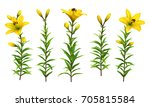 yellow lilies with green stem... | Shutterstock . vector #705815584