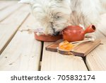 candy lollipop and dog sniffing ... | Shutterstock . vector #705832174